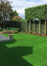 Nepgras in tuin