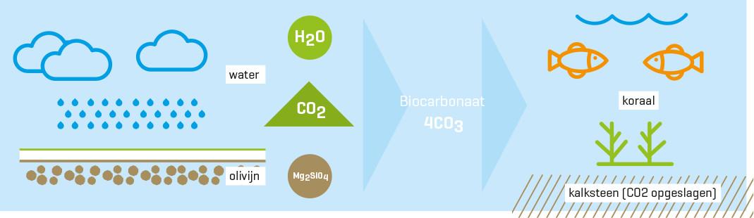 uitleg co2 bestrijding via olivijn gesteente